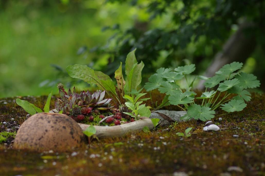 versteckte Schönheiten im Ruinengarten-Bio Bauernhof Leitenmüller