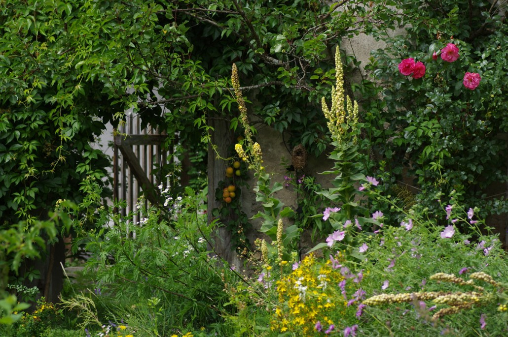 Blumen & Obst Vielfalt im Bio Garten-Bio Bauernhof Leitenmüller