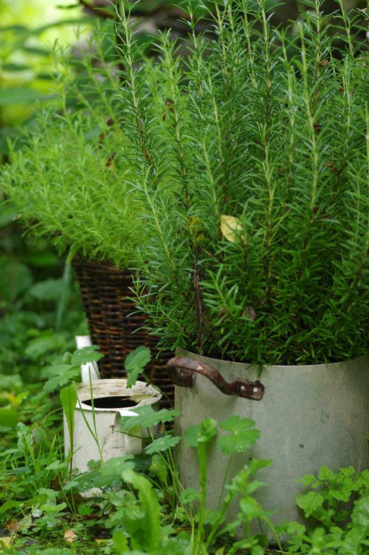 frische Gewürze & Kräuter aus dem Garten-Bio Bauernhof Leitenmüller