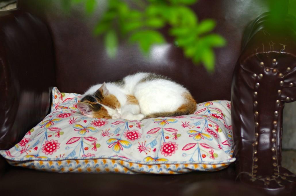 Haus & Hofkatze haben ihr Wohfühlplätzen-Bio Bauernhof Leitenmüller