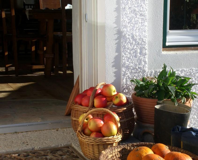 Herbstzeit-Erntezeit am Bio Bauernhof Leitenmüller
