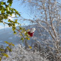 Natur, Ruhe & Entspannung - Bio Bauernhof Leitenmüller Ramsau am Dachstein