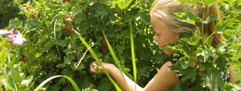 selbstgepflücktes aus dem Bio Obstgarten-Bio Bauernhof Leitenmüller