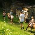 Ponyreiten - Bio Bauernhof Leitenmüller