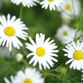 Frühling am Bio Bauernhof Leitenmüller