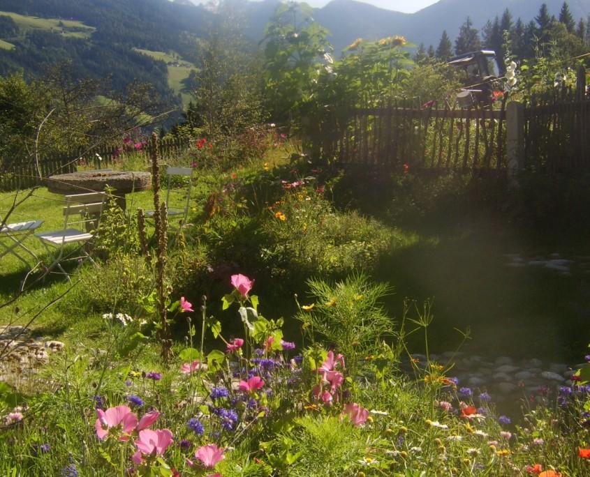 Blütenpracht im Herbst-Bio Bauernhof Leitenmüller