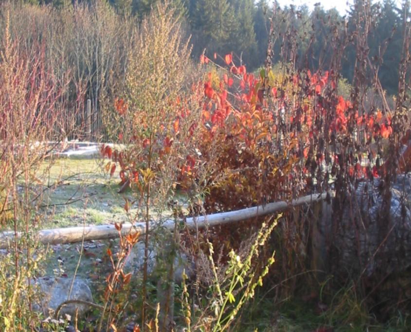 Blick in den herbstlichen Garten-Bio Bauernhof Leitenmüller