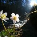 Frühlingsboten - Bio Bauernhof Leitenmüller