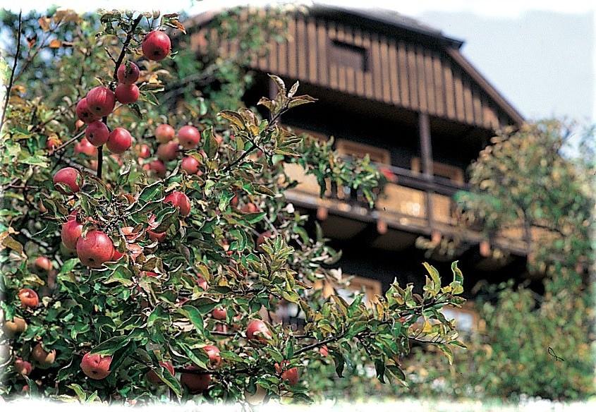 Apfelernte im Biogarten-Bio Bauernhof Leitenmüller