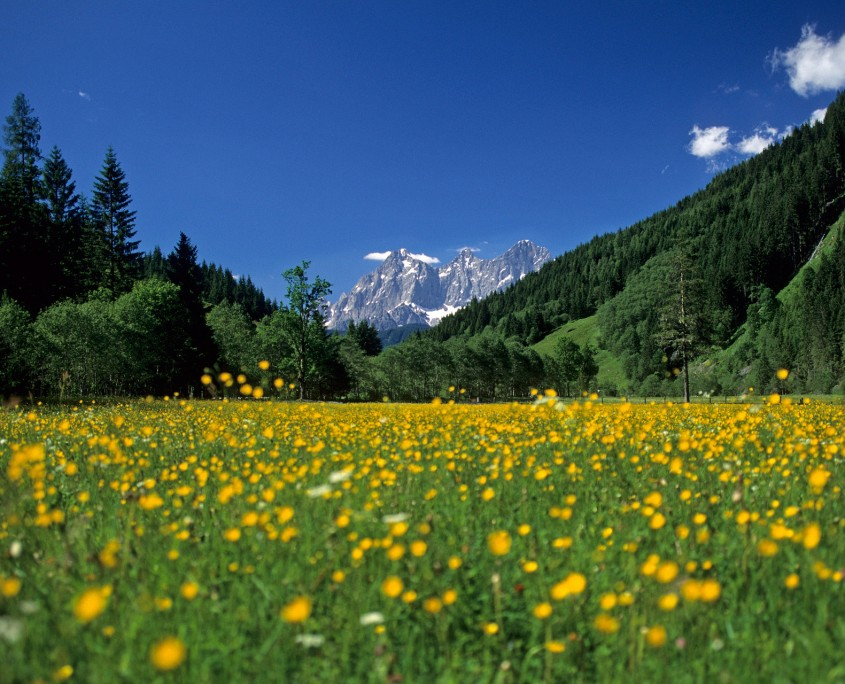 Frühling in der Urlaubsregion Ramsau am Dachstein