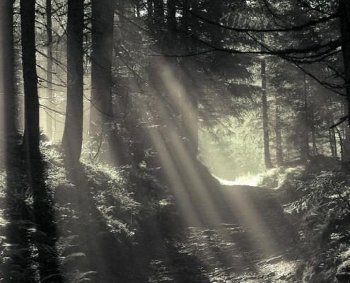 Landwohnung Herbstwald - Bio Bauernhof Leitenmüller