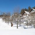 Obstgarten im Winter - Bio Bauernhof Leitenmüller